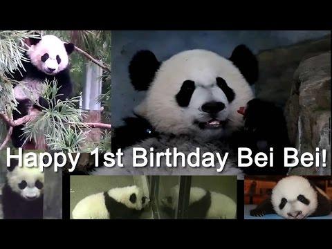 Happy 1st Birthday Bei Bei Panda!