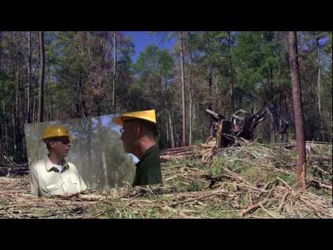 Forest Health and Tree Thinning in an Urban Wilderness