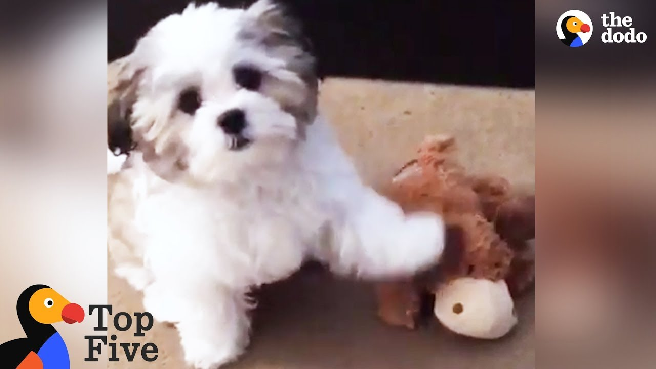 Dog ALWAYS Points to His Very Best Friend + Other Funny Animals | The Dodo