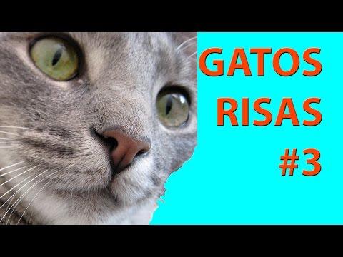 Los Mejores Videos Graciosos de Gatos! Gatos chistosos - caidas de gatos - Compilado #3
