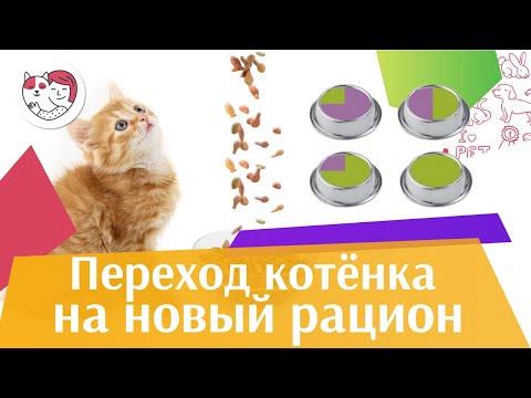Вопрос: Как переводить кошек на другой сухой корм?
