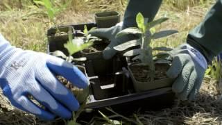 #LivingAcres: Milkweed Planting