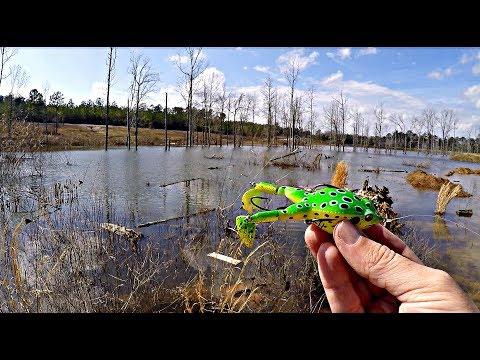Frog Fishing Tournament!!