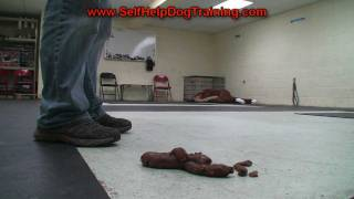 How Not To Train Your Dog - House Breaking By K9-1.com
