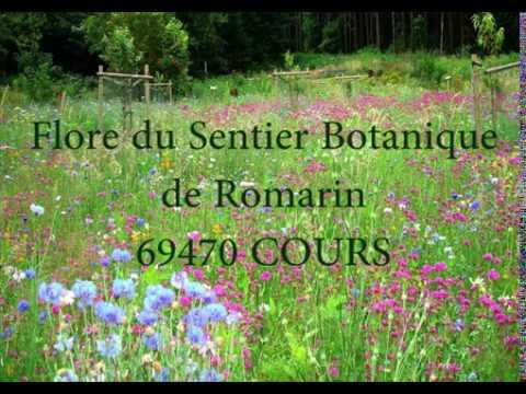 la Flore du Sentier Botanique de Romarin