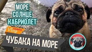 Море, солнце, кабриолет. Чубака в Крыму. Chubaka Vlog!