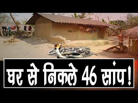 GHAZIPUR-घर से निकले 46 सांप, 46 सांप निकलने से घर वालों के साथ गांव वाले भी दहशत में