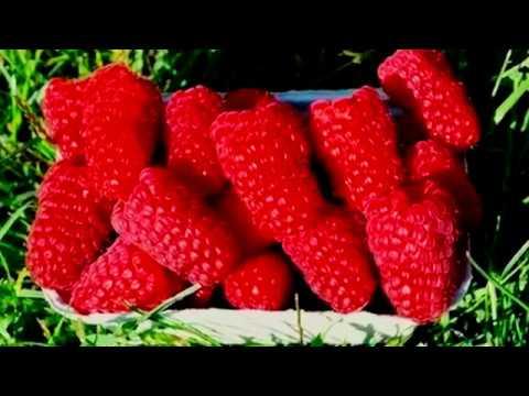 Малина сорт Пшехиба описание сорта | маравилла | описание | пшехиба | малиной | малина | купить | сорта | пшехи | уход | сорт