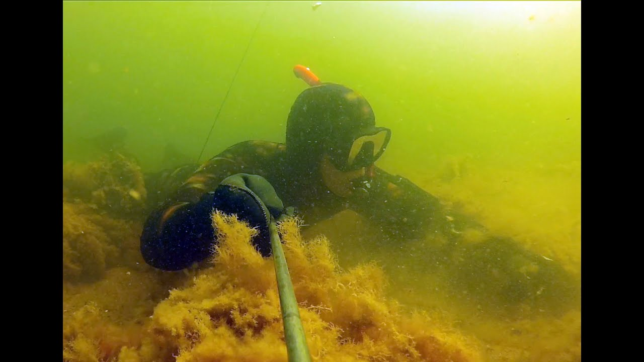 подводная охота # 7 в поисках рыбы