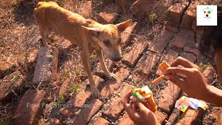 Poor indian dog | Food for street animal's