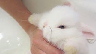 Baby Bunny Takes a Bath