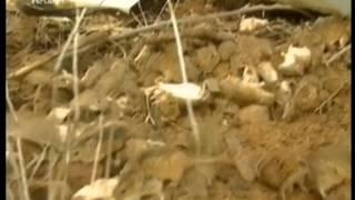Нападение крыс