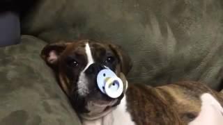 Если не знаете как усыпить собаку вотакво