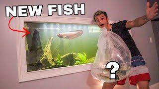 STOCKING My 160G with NEW FISH!!!