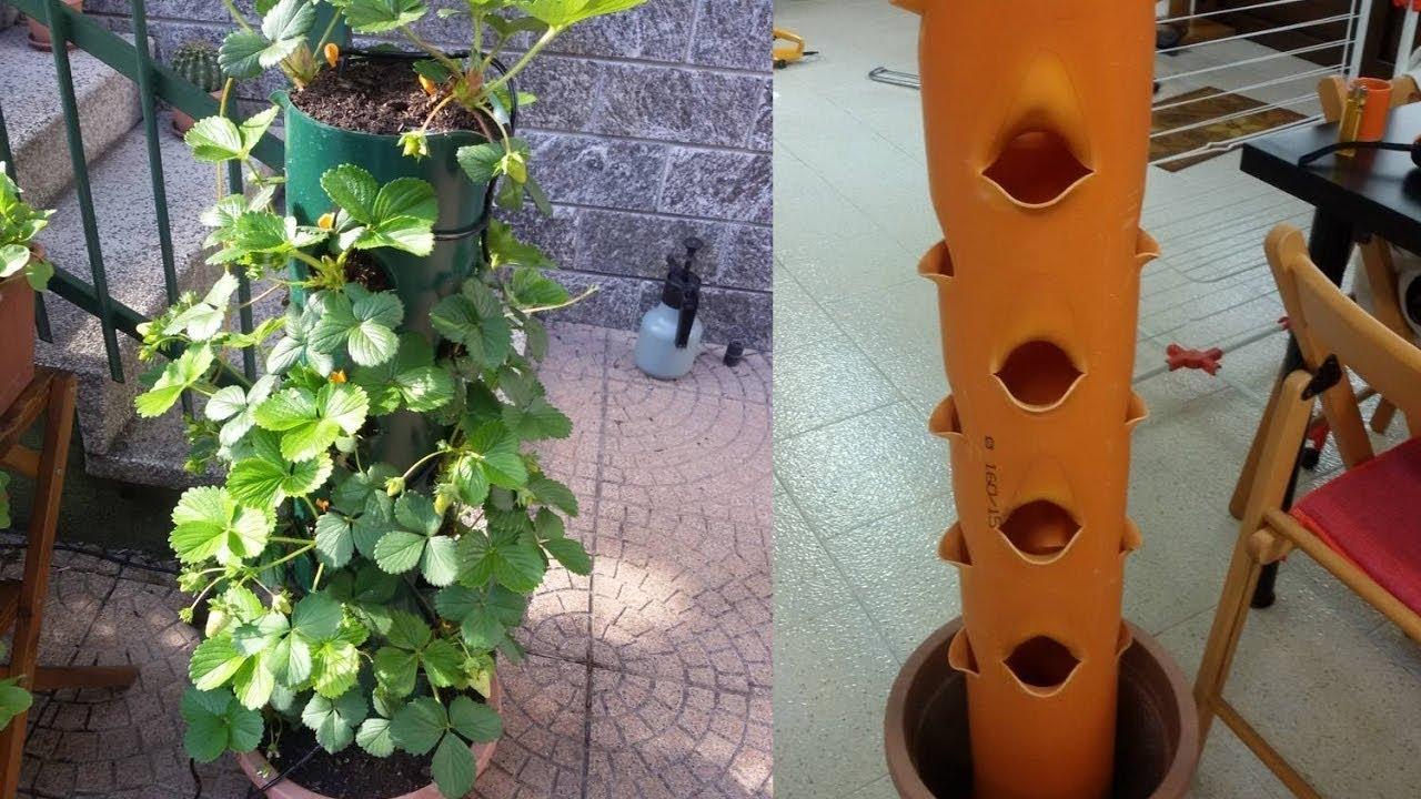 Coltivare fragole in vaso verticale sul balcone youtube for Fragole in vaso