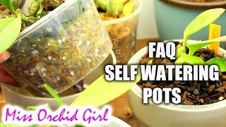 Orchids in self watering pots - Most common questions answered!