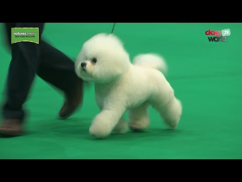 Birmingham National Dog Show 2017 - Best in Show