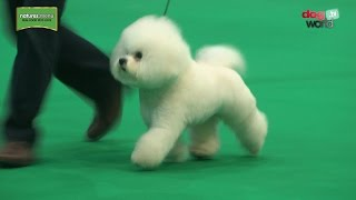 At the National Dog Show 2017 finale judge Bill Browne-Cole was set...