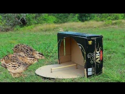 Creative Technology Unique Quail Bird Trap Make From Paper Box - Technology Bird Trap