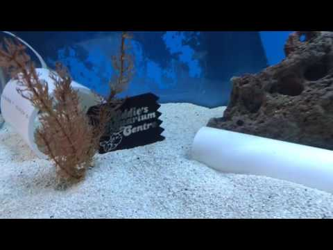 Eddie's Aquarium Thursday Tank Tours March, 9 2017