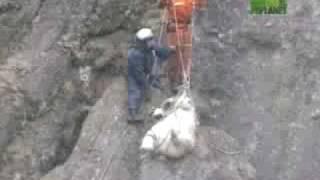 Polar Bear Rescue