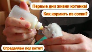 Первые дни жизни котенка! Как кормить из соски? Определяем пол!