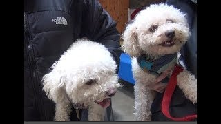 2018 Blessing of the Animals at the Community Church of Alpine
