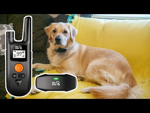 Dog Care Dog Shock Collar Review // Remote Dog Training Collar