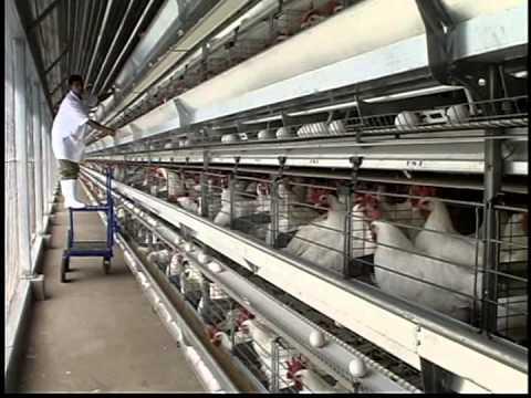 Primera Certificación HACCP de Huevos del Granjero (2005)