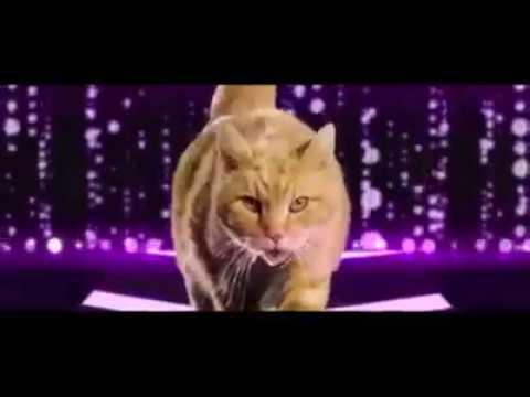 Miau Miau Miau - Canción Gatos // Song Cats