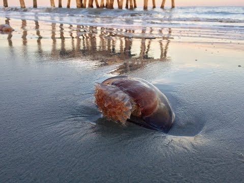 Top 10 Weird Facts About Jellyfish