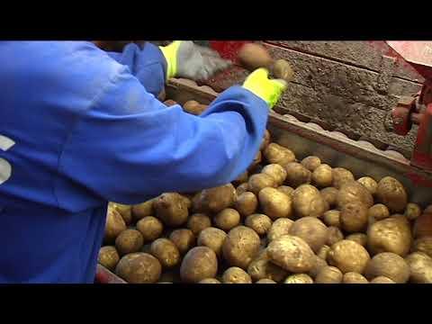 Previa Jornada sobre la Patata en A Limia 25 2 20