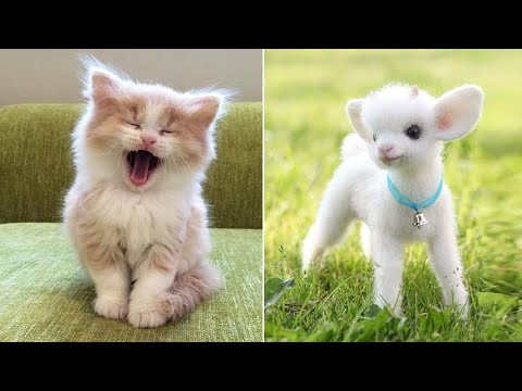 Baby Animals 🔴 Videos Compilation cute moment of Dogs and Cats (2020) Perros y Gatos Recopilación #3