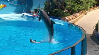 Zoomarine dolphin show 🐬 in Portugal (June 2019)