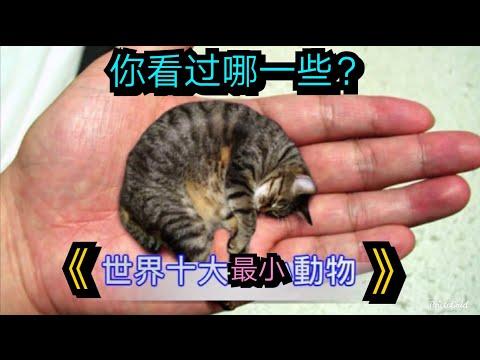 世界最小最迷你的动物,你见过哪些?