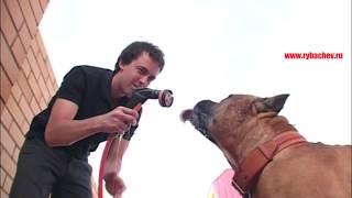 Дик пьёт воду из шланга) (на улице +30с) [Рыбачёв и Пёс НЕИЗДАННОЕ]
