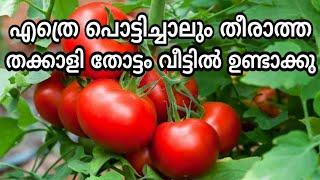 1 തക്കാളി കൊണ്ട് 1 വലിയ തക്കാളി തോട്ടം | thakkali jaiva krishi tips malayalam | adukkala thottam tip