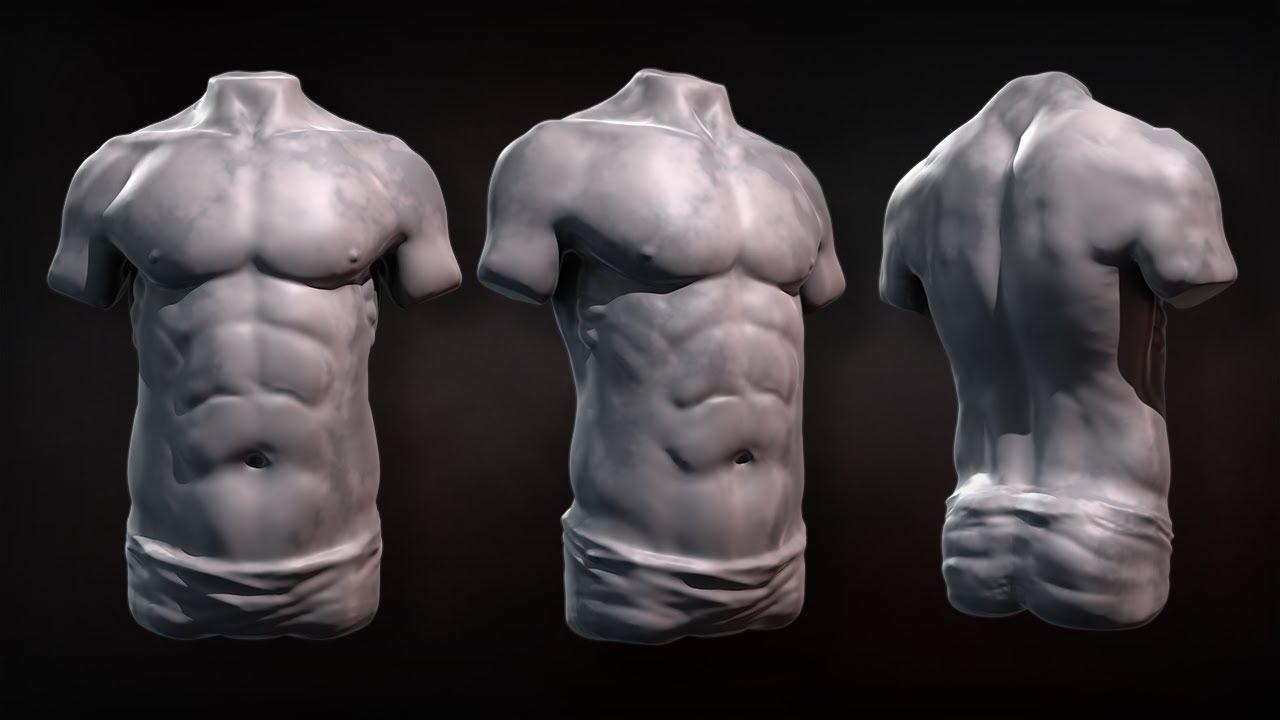Male Torso Anatomy Meinafrikanischemangotabletten