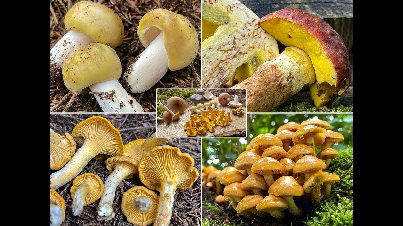 Download Pilze im August | 01.08. & 02.08.2021 | Tolle Vielfalt zum Start in den August! | Speisepilze & mehr