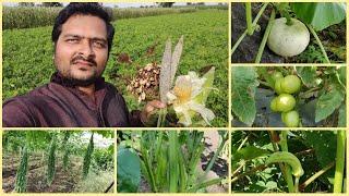 हमारी खेती | Our Farm Vlog | Indian Rural Village Tour | Farming