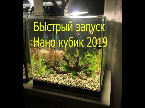 Быстрый запуск аквариума, биология, Нано кубик 2019