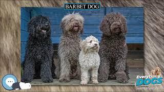 Barbet dog  Everything Dog Breeds