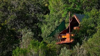 10 Amazing Tree Houses in South Africa