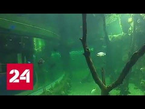 Тысячи видов обитателей моря: в Москве открывается новый гигантский океанариум