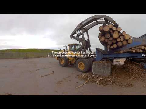 forestry in scotland 360 video
