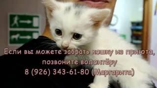 Приютские котики ищут дом