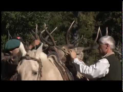 Argentina Red Stag Hunt