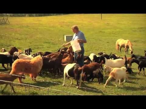 Goats Can Be A Financially Positive Addition To An Operation