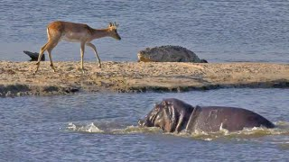 Buck Tries to Out-Swim Crocodiles and Hippos