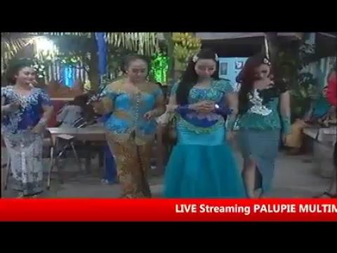 Live Streaming palupie multimedia // AREVA //  Srimulyo// -  3 - 9-  2017,